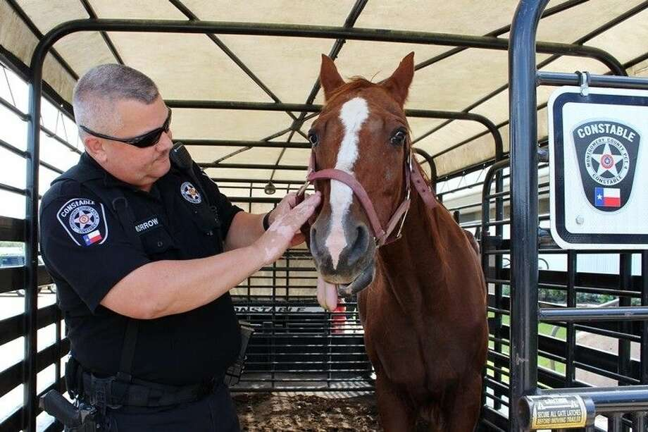 An injured mare was found Monday morning, Oct. 6, under the river bridge along SH 242. Precinct 4 Livestock Deputy Dwayne Morrow (pictured) said the mare has trauma to the side of her head in the jaw area, as well as an injured leg. Photo: Submitted