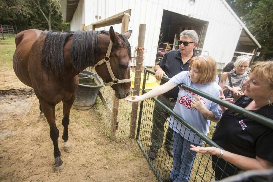 Brandi Cate feeds one of three horses that live at the farm as students from The Village Learning Center meet animals rescued by K9 Airlift on Oct. 9, 2014, in Huffman. Photo: ANDREW BUCKLEY