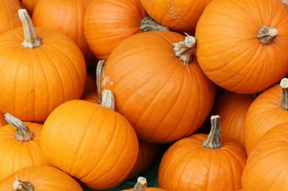 The May Community Center will host its annual Fall Festival and Pumpkin Patch Fundraiser on Saturday, Oct. 3 from 10 a.m. to 3 p.m.