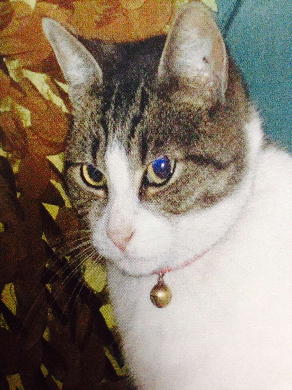 Thumper, one of the San Jose cats to have been killed by serial cat killer Robert Farmer.