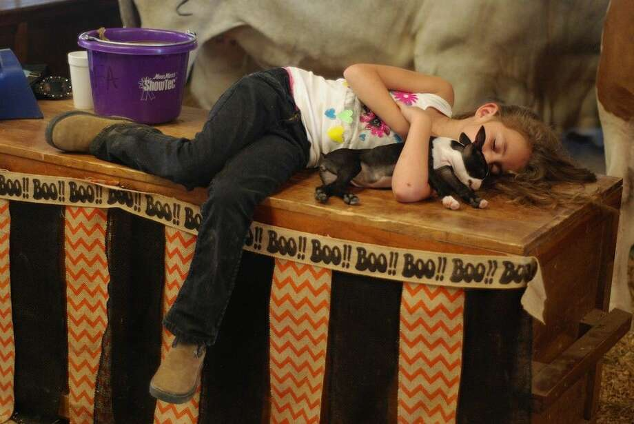 It was a long week for participants at the TVE Livestock Show, and by Saturday afternoon, Oct. 18, kids, parents, and even the animals were running out of steam. Here Tarkington FFA Advisor David Sheffield's child and her puppy both take a nap in the TVE barn. Photo: Casey Stinnett