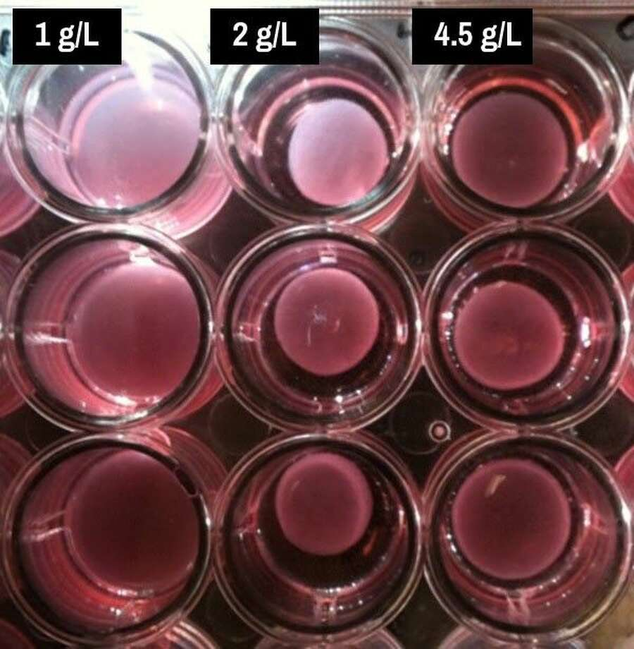 Assays created in a Rice University lab contain interstitial heart-valve cells, collagen and nutrients. These contain varying levels of glucose metabolized by the cells as they create the extracellular matrix that forms valves. The lab found that 2 grams per liter of glucose in the solution (center vertical row) worked best, but either more or less slowed the process.