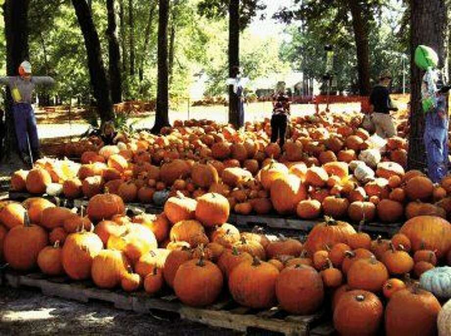 Kingwood's 10th annual Pumpkin Patch will be open daily from 9 a.m. — 7 p.m. until Oct. 31.
