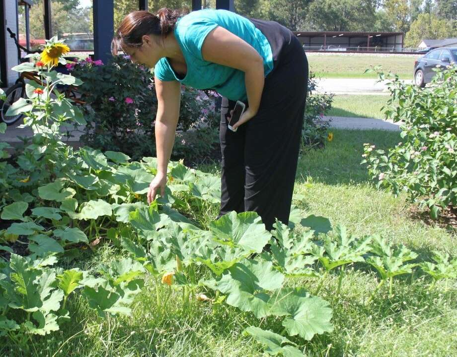 Renee Everitt of the Shepherd Public Library shows the blooming pumpkin patch growing in the adjacent park. Photo: Jacob McAdams