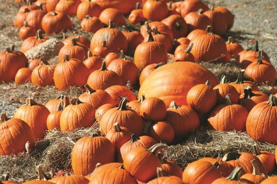 The pumpkins for First United Methodist Church of Cleveland's pumpkin patch are expected to arrive on Friday, Oct. 16. They will be available for purchase until Halloween night. Photo: File Photo