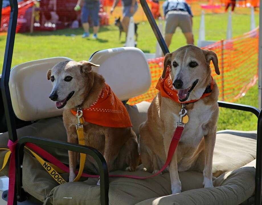 Bob and Marley wait for the golf cart parade to start at the 2014 Barktoberfest event, benefitting Bay Area Pet Adoptions. Photo credit: Theresa Viola
