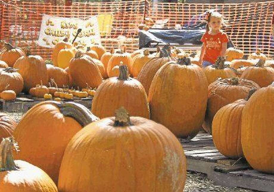 Camryn Lumpkin, age 4, looks for a pumpkin at Good Shepherd Episcopal Church in Kingwood on Oct. 17, 2012. Photo: Jason Fochtman