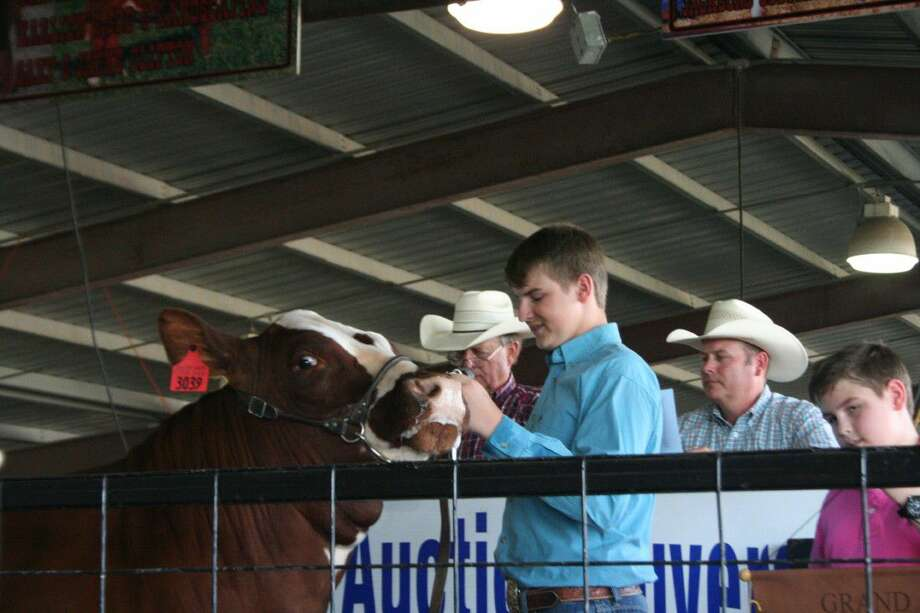 Garret Welch shows off his Grand Champion steer as it auctioned off at the Crosby Fair and Rodeo Wednesday, June 8, 2016.