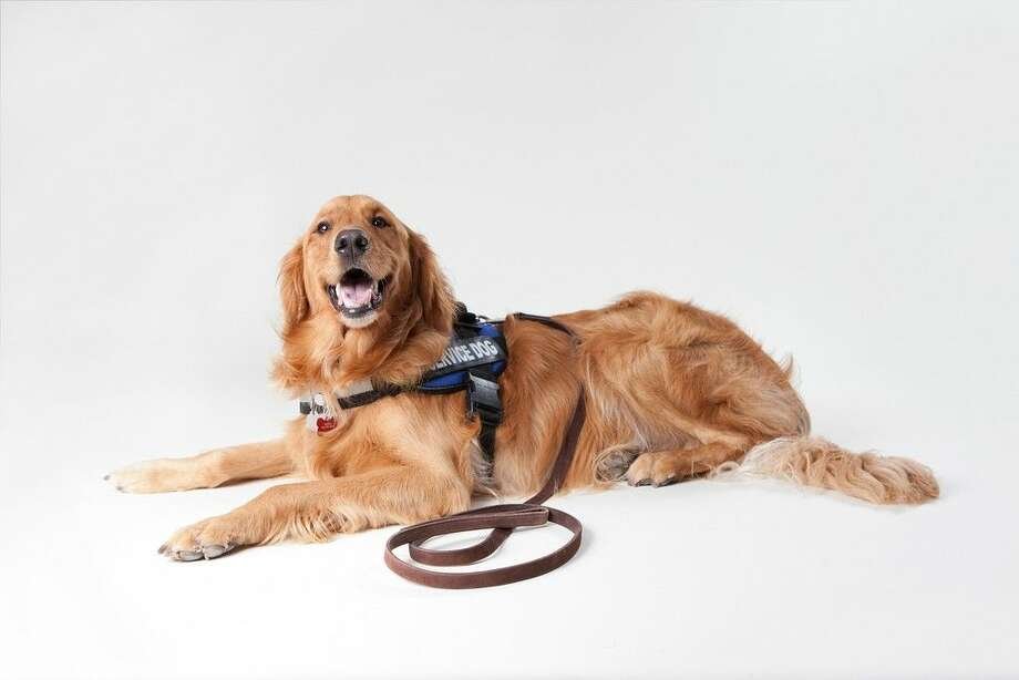 Morgan Watkins will be speaking about service dogs at the Kingwood Library on Friday, Nov. 20. The seminar is hosted by the Kingwood Delta Chapter of Houston Assembly of Delphians.