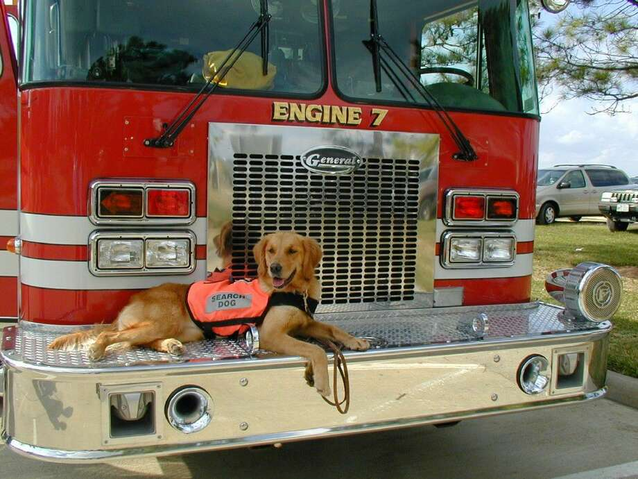 Bretagne was the last known living 9/11 rescue dog. She was a member of the Cy-Fair VFD. She passed away in Cypress after living for 16 years.