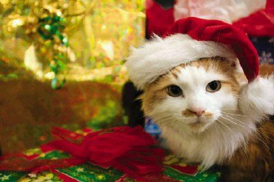 Blue Pond Pet Photography, Personal Touch Pet Sitting, and the Town Center Events Committee, will sponsor pictures with Santa, Saturday, Dec. 7, from 10 a.m. until 5 p.m.