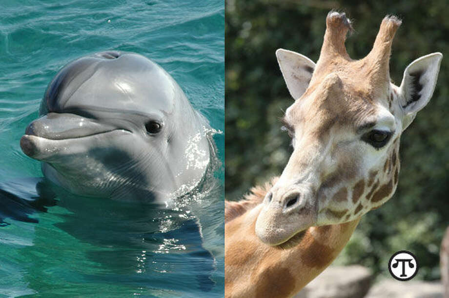 From the dolphins in the seas to the giraffes reaching into the trees, the magnificent creatures that share our world can be seen, saved and appreciated at zoos and aquariums. (NAPS)