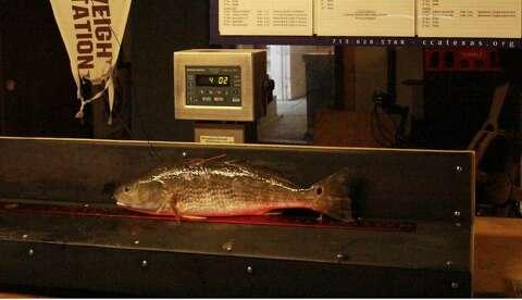 First tagged redfish winner of CCA Texas STAR tournament