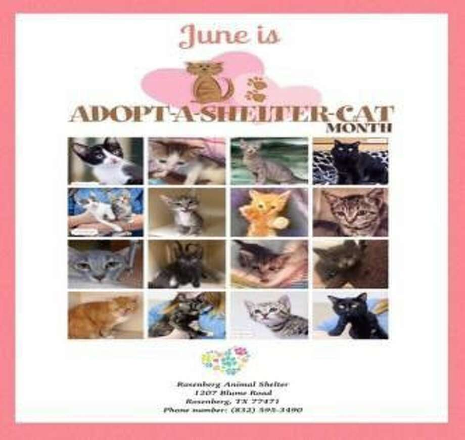 A community-based event to raise awareness and respect for our companion animals in City of Rosenberg. June is Adopt-A-Shelter Cat Month.