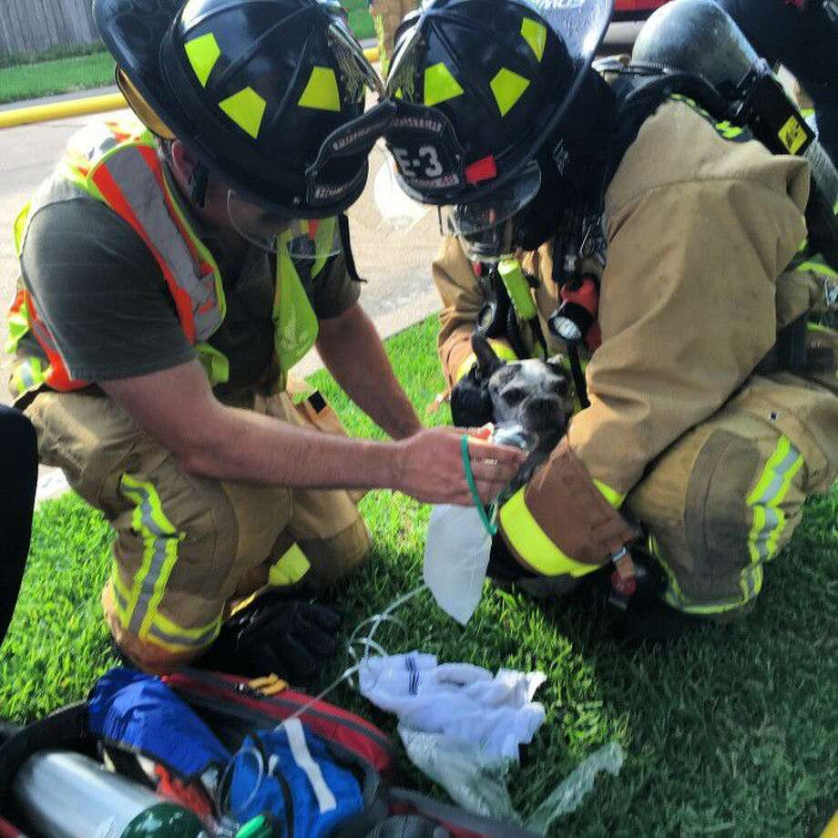 Harris County ESD 48 personnel provide oxygen to Apollo. He was found in the midst of a small fire in Katy's Williamsburg Parish subdivision the department responded to Monday evening and rescued.