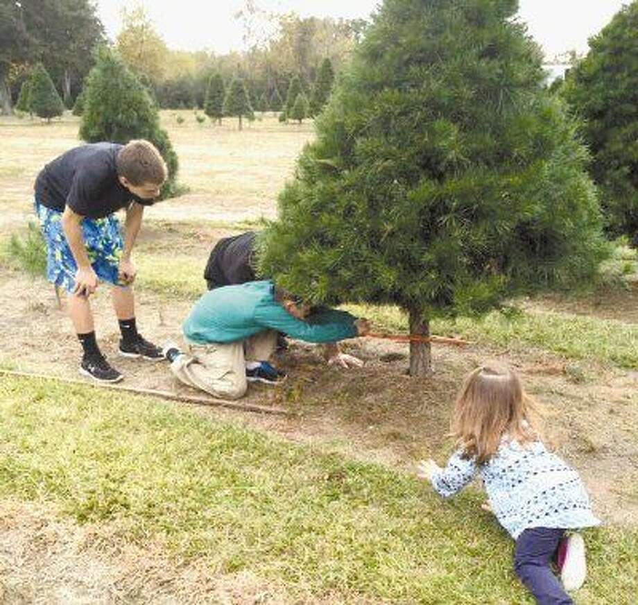 Christmas tree farms open to eager customers - Houston Chronicle