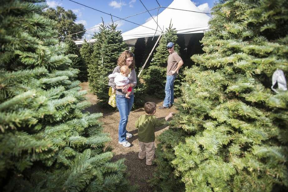 The Hotham family searches for the perfect tree Nov. 29, 2014, at Warren's Southern Gardens in Kingwood. Photo: ANDREW BUCKLEY