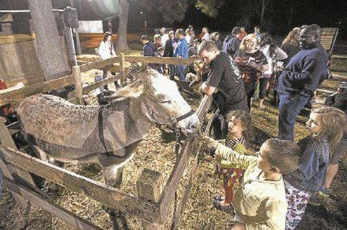 Children feed a donkey during a Live Nativity performance last year at Good Shepherd Episcopal Church in Kingwood.