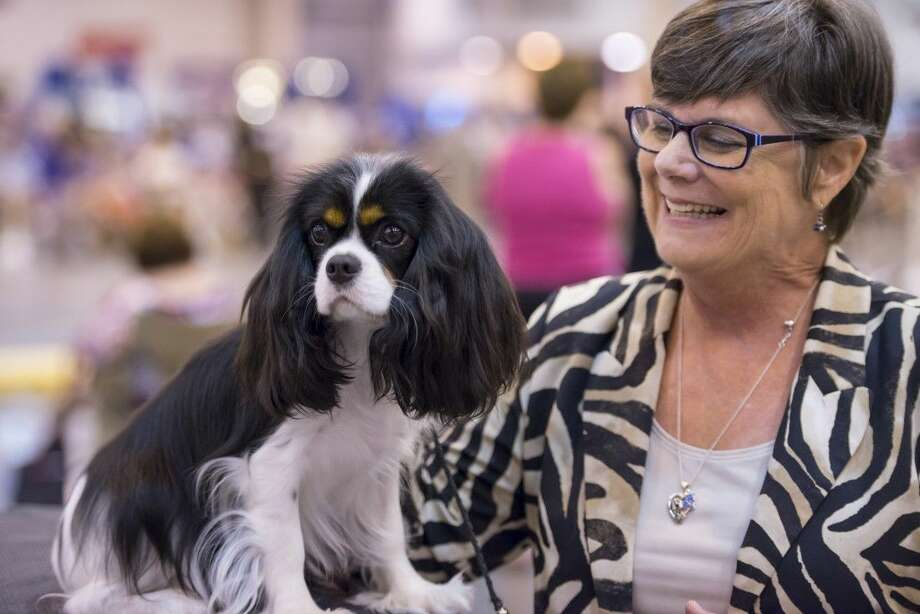 Canine competitors will converge on the city, July 20-24, for the 39th annual Houston World Series of Dog Shows at NRG Park.