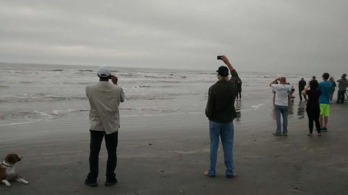 Onlookers watch as the whale flounders in the surf.