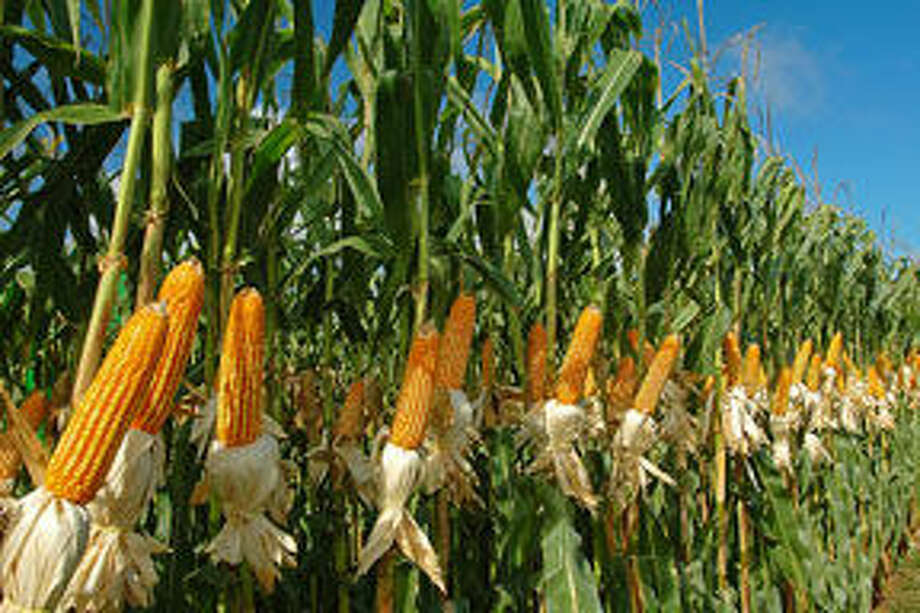 New technologies are enabling the production of more ethanol from the same kernel of corn.