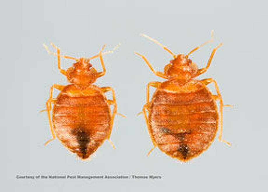 How to avoid bed bugs while enjoying some time away from home. Photo: Thomas V. Myers