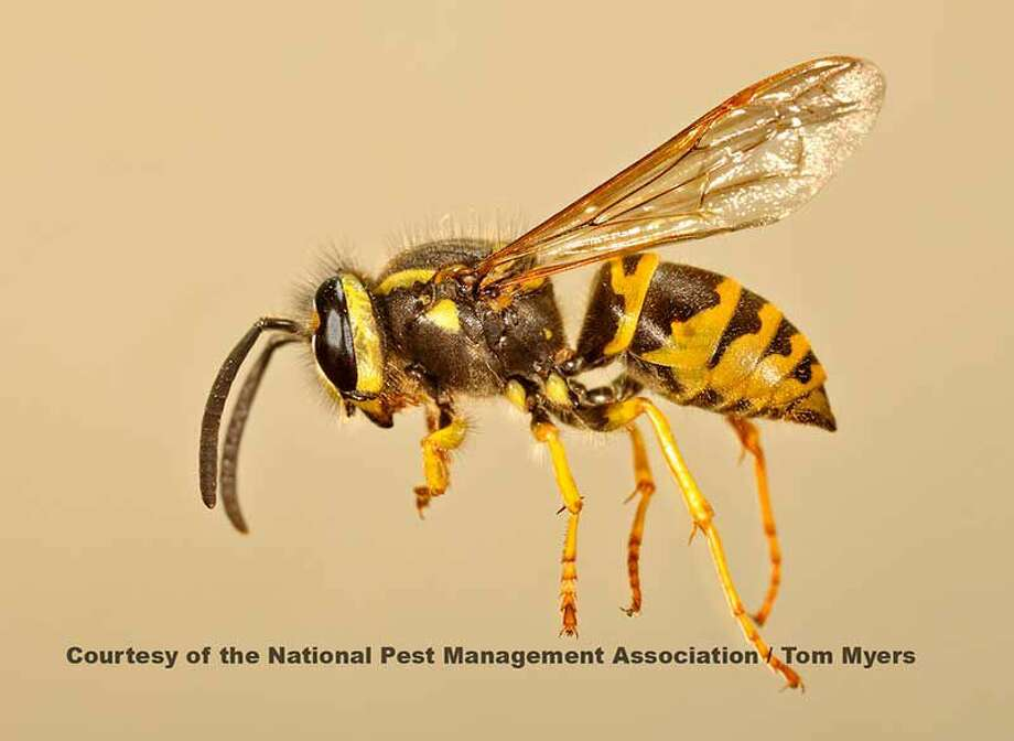 How to save yourself from getting stung this summer. Photo: Thomas V. Myers