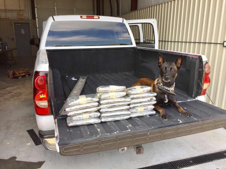 Fort Bend County Sheriff K-9 Kaja lies next to the haul she alerted to during a recent traffic stop. Photo: FBCSO