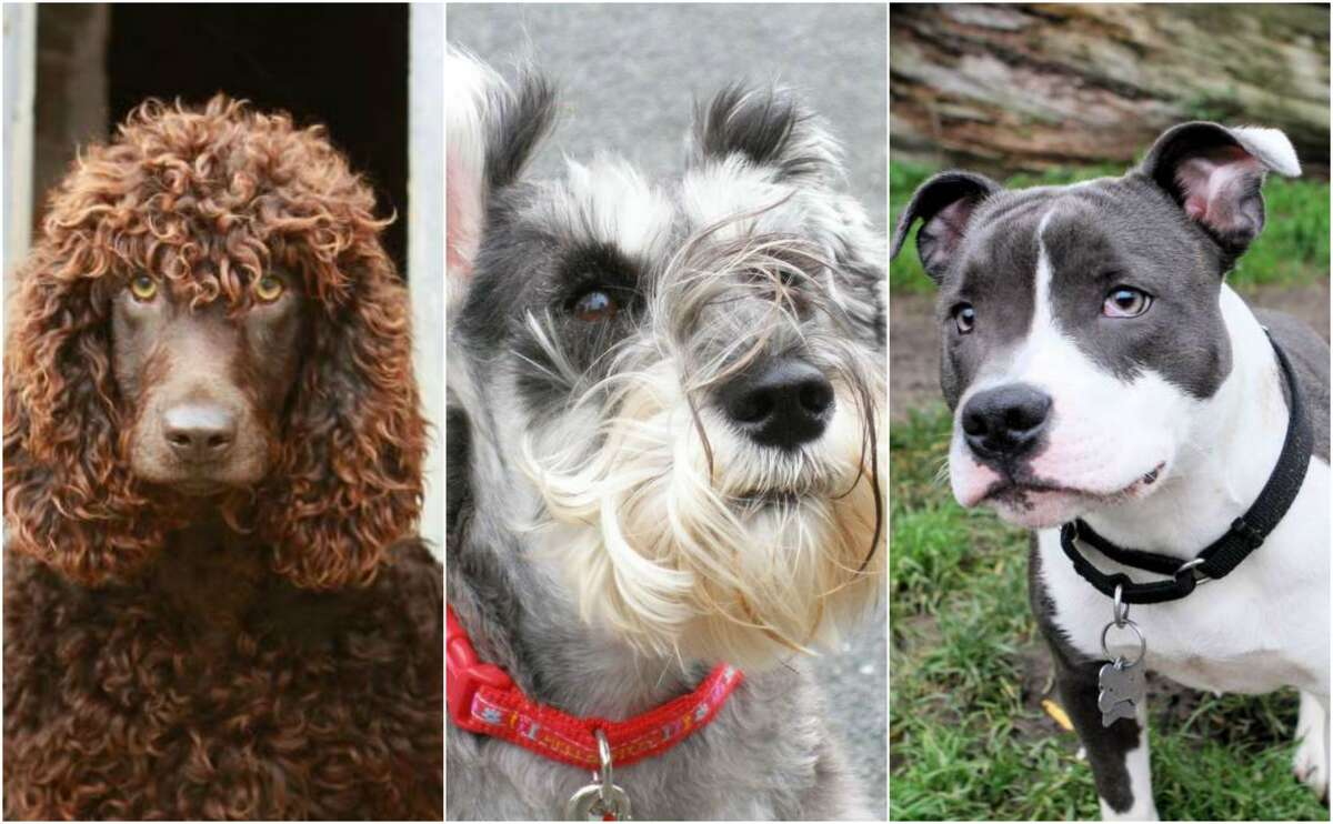 >>Keep clicking for a look at the best dogs to bring to work.
