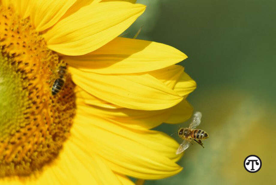 You can help pollinator friends on National Honey Bee Day, National Honey Month and all year long. (NAPS)