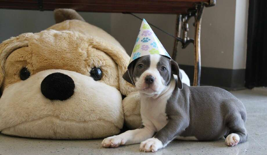 Since the birthdates of many shelter dogs are unknown, August 1 is the designated day to celebrate, as they did at Friendswood Animal Control.