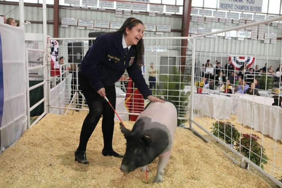 Marybel Gomez of Spring Woods High School shows her Grand Champion Swine Saturday at the Spring Branch FFA Livestock Show and Sale. The 36th annual event netted Spring Branch FFA students more than $178,000. Photo: Alan Warren