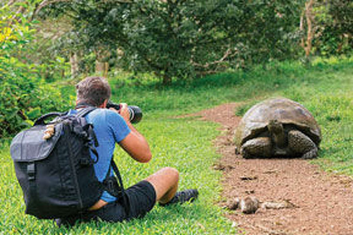 Photograph giant tortoises in the wilds of Galapagos.