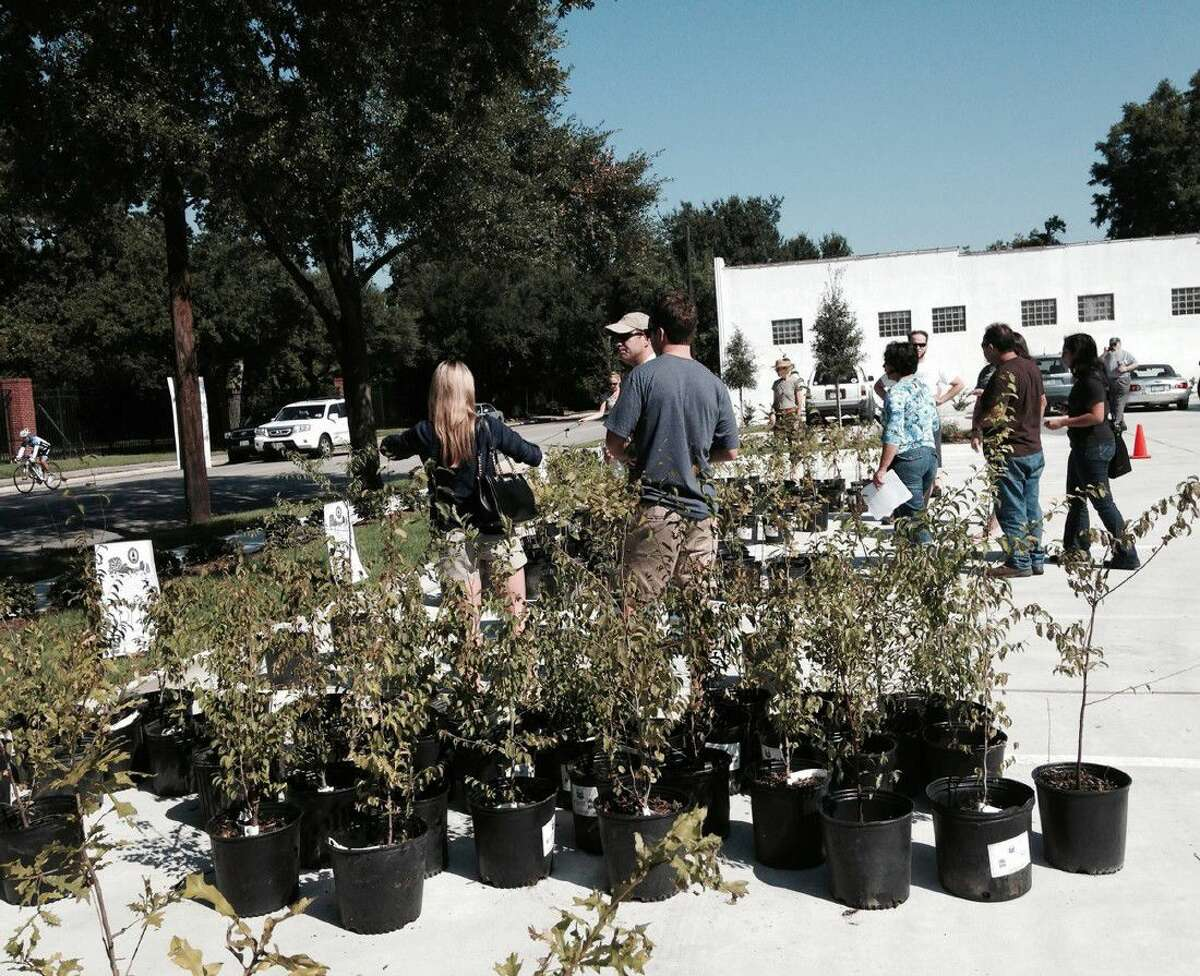 The Houston Heights Association will distribute 150 to 300 three- and five-gallon containers of native trees to Houstonians as part of its Annual Urban Forestry Gift of Trees Day celebration and Yale Green Corridor dedication on Sept. 18.