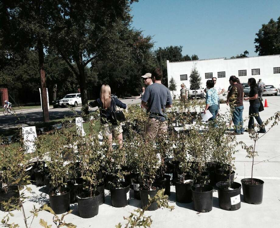 The Houston Heights Association will distribute 150 to 300 three- and five-gallon containers of native trees to Houstonians as part of its Annual Urban Forestry Gift of Trees Day celebration and Yale Green Corridor dedication on Sept. 18. Photo: Houston Heights Association