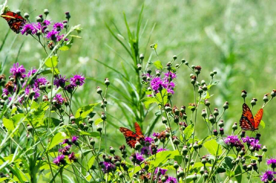 "The right native plants can help attract bees and butterflies. Learn more in ""Creating a Backyard Habitat"" Sept. 25 at the Houston Arboretum. Photo: Houston Arboretum"