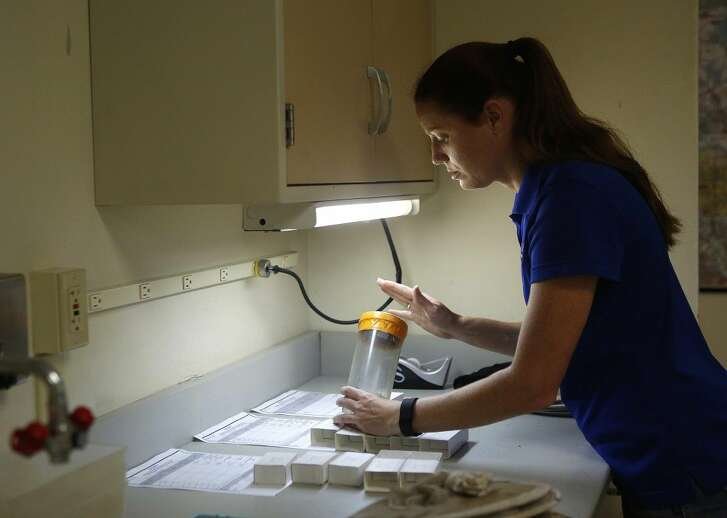 Surveillance lab coordinator Christy Roberts sorts species of mosquitos that were trapped around the county inside the Mosquito Control division of the Harris County Public Health and Environmental Services. State and county health officials are reminding people to take precautions against West Nile virus even as it has been overshadowed this summer by concerns about the Zika virus.