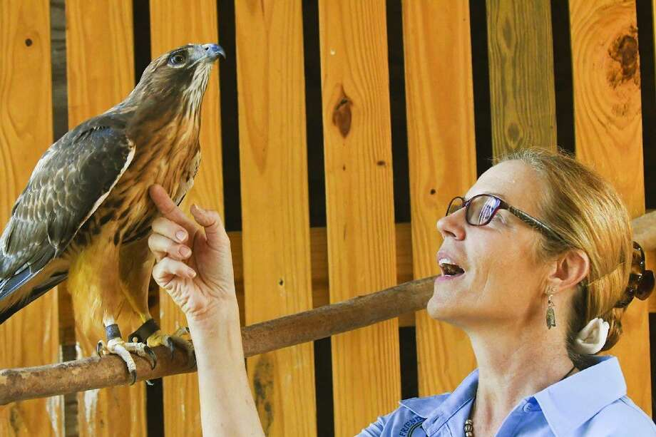 Friends of Texas Wildlife president Marcia Bartos helps a red-tailed hawk named Zeus who is blind. The new flight cage enables Friends of Texas Wildlife to care for and rehabilitate large birds of prey like eagles, hawks, and owls Photo: Tony Gaines