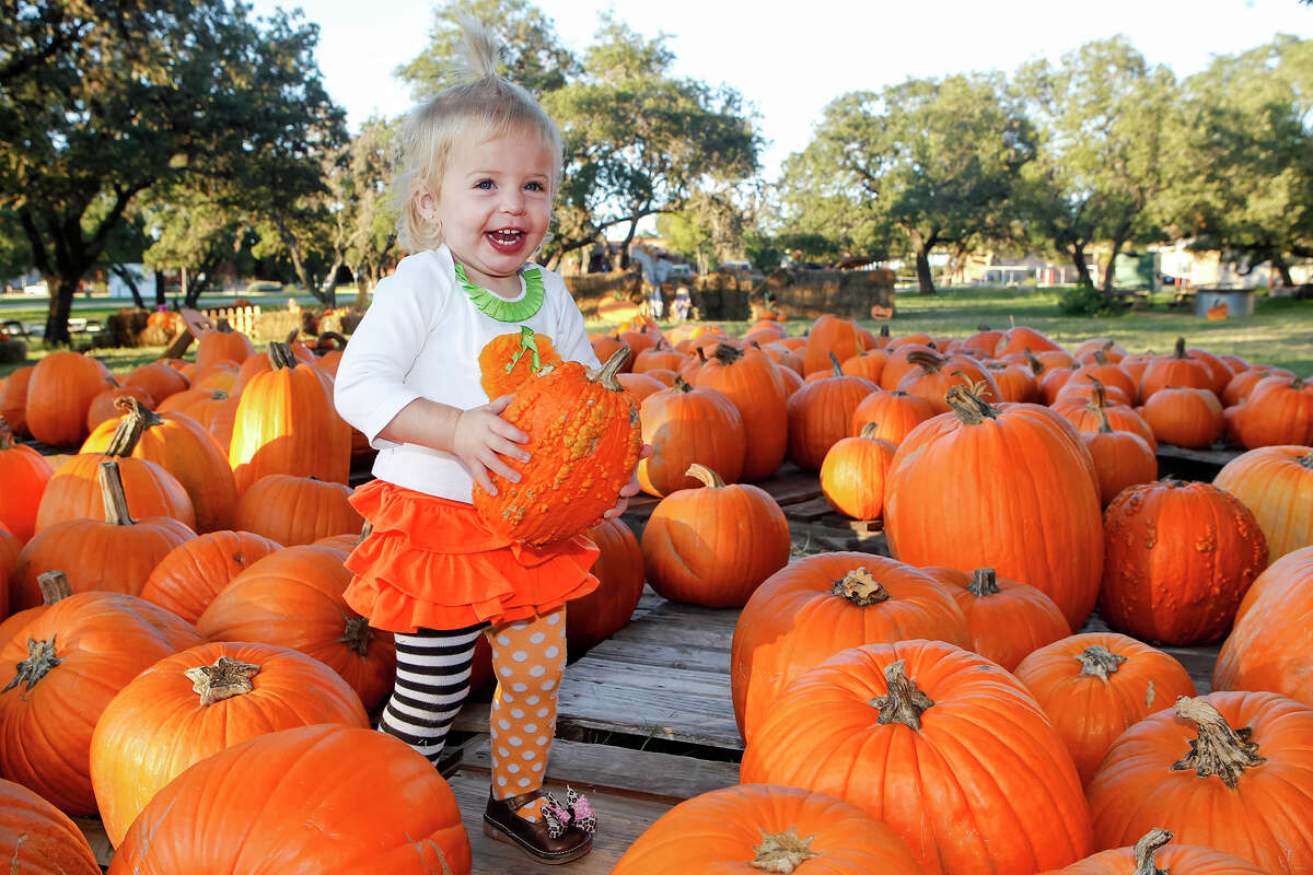 Owl Creek Pumpkin Patch: 12355 Military Dr., San Antonio, Texas 78253 Opens Sept. 26. As of Thursday, face masks are required at check-in but not on the grounds, according to representatives from the pumpkin patch.