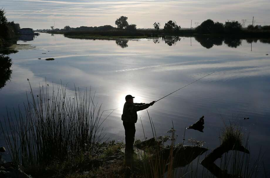 Brian McDevitt casts a fishing line in Rock Slough at Holland Tract and Delta roads in Brentwood, Calif. on Friday, Oct. 7, 2016. A study released by the Bay Institute shows a dramatic decrease in river water levels flowing into the bay delta. Photo: Paul Chinn, The Chronicle