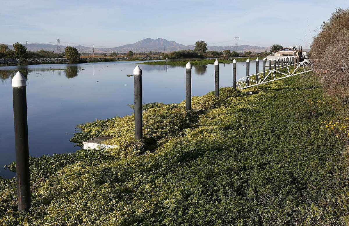 Vegetation has taken over docks at a Rock Slough marina in Brentwood, Calif. on Friday, Oct. 7, 2016. A study released by the Bay Institute shows a dramatic decrease in river water levels flowing into the bay delta.