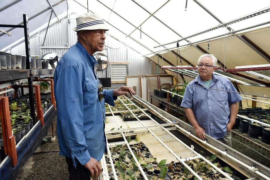 Robert Best (left) and Roy Fong in Fong's greenhouse. Photo: Michael Short, Special To The Chronicle