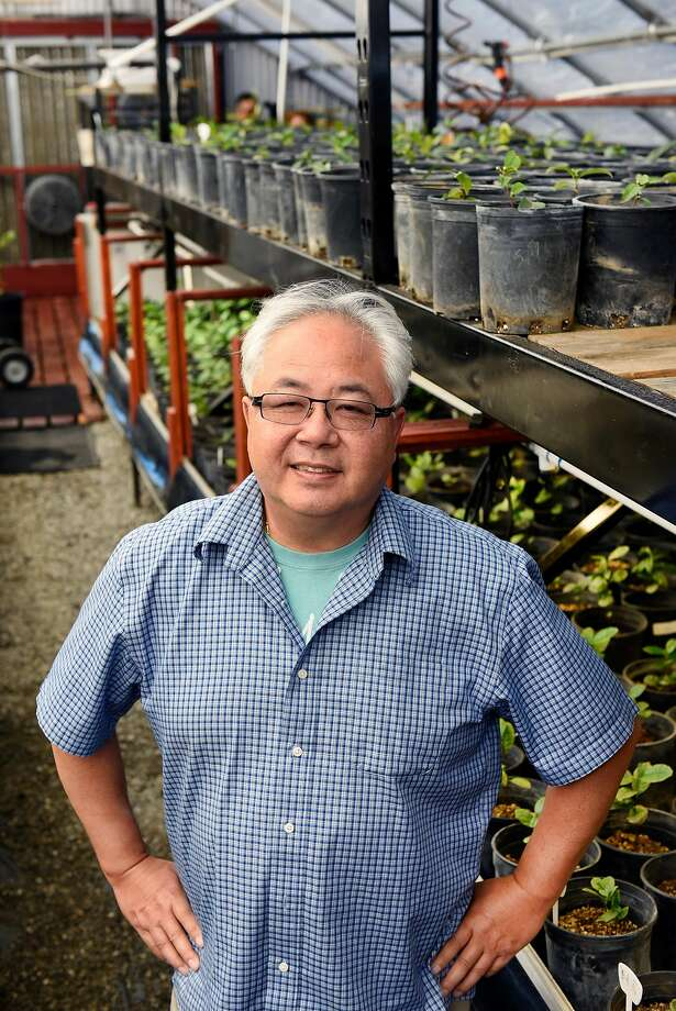 Roy Fong, owner of Imperial Tea Court, poses for a portrait in a greenhouse on his farm in Esparto, CA Thursday, October 6, 2016. Photo: Michael Short, Special To The Chronicle