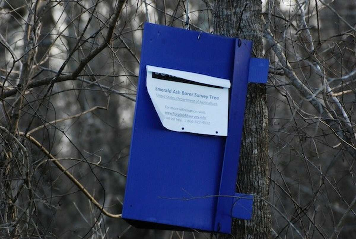 The USDA has purple boxes hanging on trees around Liberty County as part if its Emerald Ash Borer Survey.