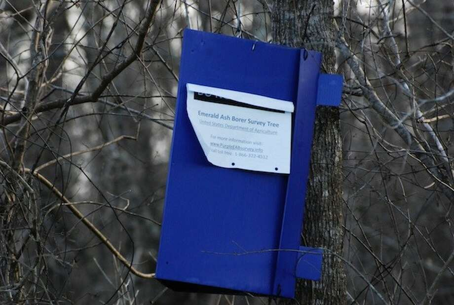 The USDA has purple boxes hanging on trees around Liberty County as part if its Emerald Ash Borer Survey. Photo: CASEY STINNETT / Houston Community Newspapers, 2014