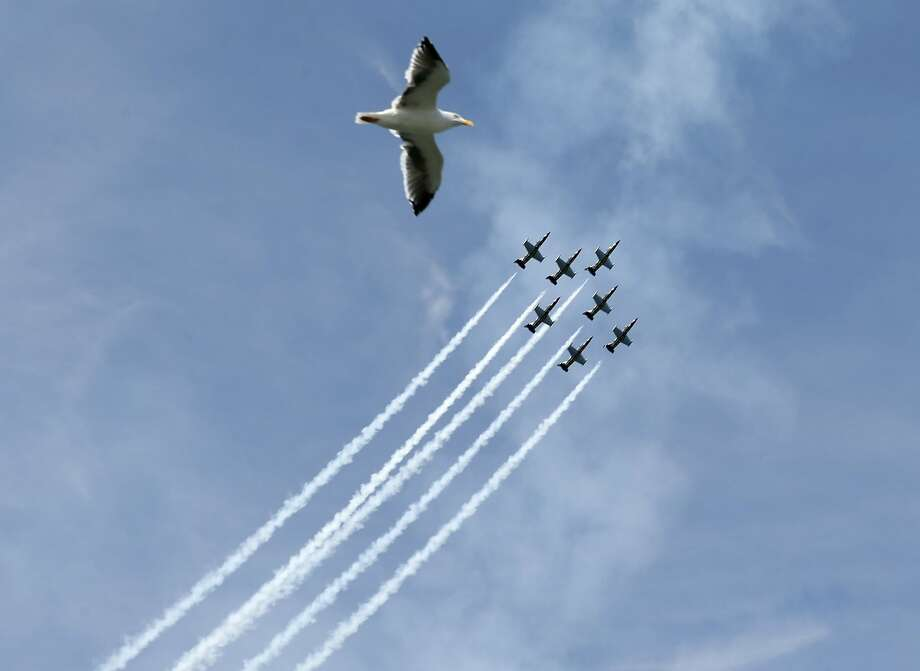 A seagull flies with the Breitling Jet Team during the Fleet Week air show in San Francisco, Calif. on Friday, Oct. 7, 2016. Photo: Paul Chinn, The Chronicle
