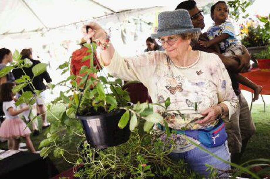 Gigi Hancock, a member of The Woodlands Garden Club, organizes plants on sale during The Woodlands Wildflower Festival Saturday at Town Green Park. Photo: Michael Minasi