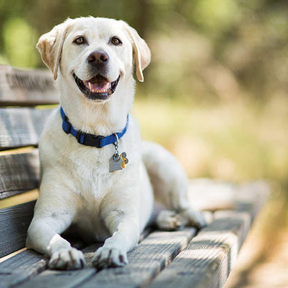 Photo: Purple Collar Pet Photography