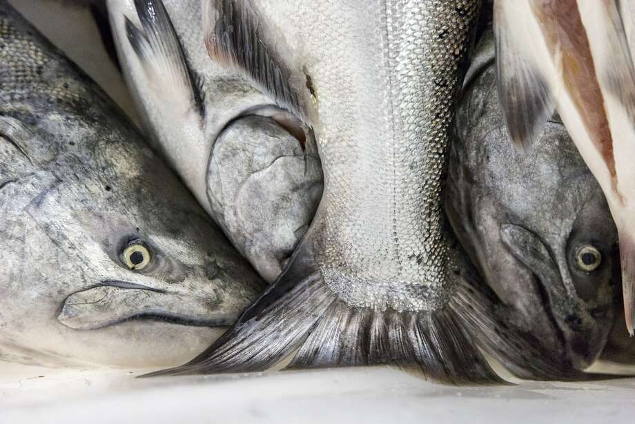 Chinook salmon caught in October 2016 by John Eiserich, a fisherman and boat owner of Scoma's, docked at Pier 45 in San Francisco. Photo: Santiago Mejia, Special To The Chronicle