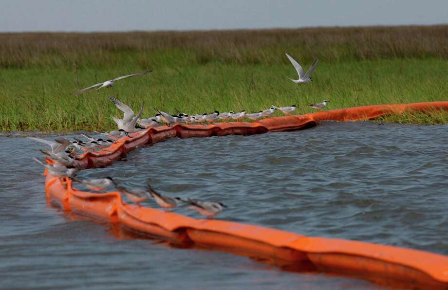 Sea gulls sit on a containment boom at Catfish Pass in Breton Sound  on May 3, 2010 as efforts continued to protect the fragile Louisiana marshes from the Deepwater Horizon oil spill. ( Melissa Phillip / Houston Chronicle ) Photo: Melissa Phillip, Staff / Houston Chronicle